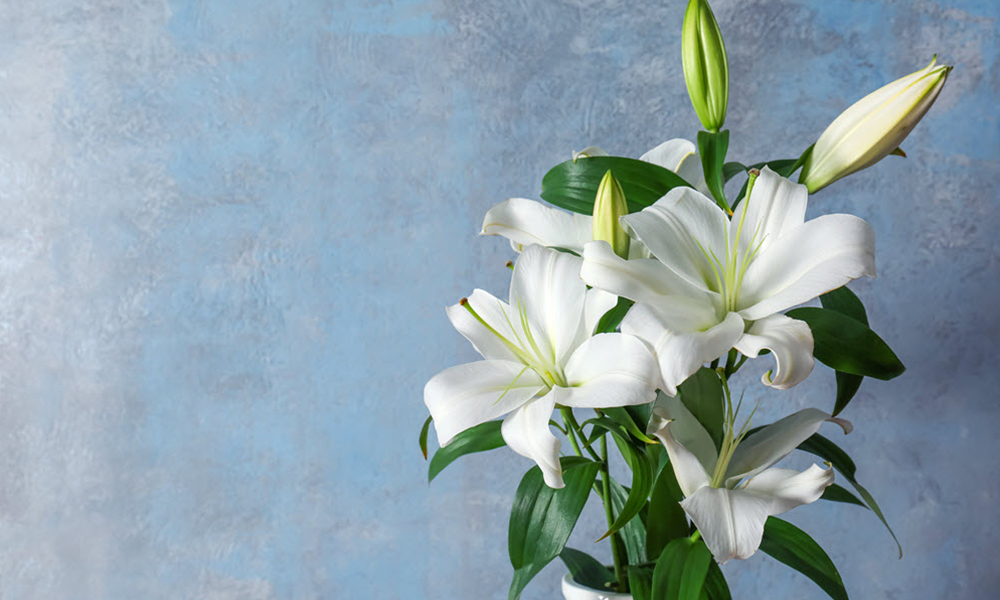 floristeriaparque3_flores_lirios