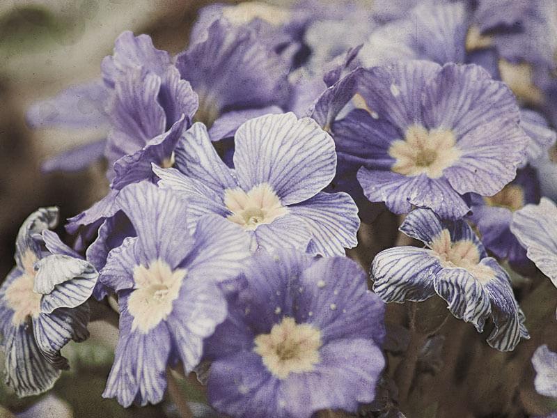 home_flower_gallery8