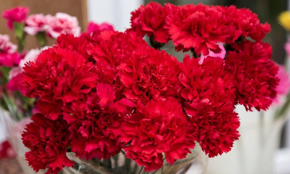 claveles rojos