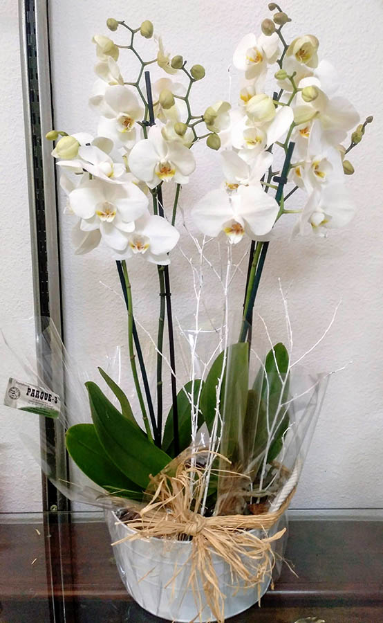 floristeriaparque3_Arreglo_de_orquidea_blanca