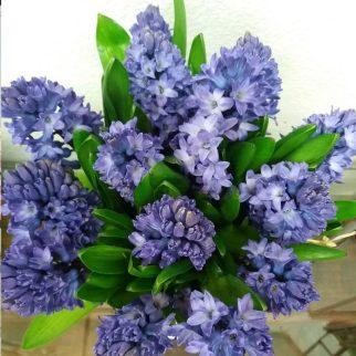 comprar flores en Alcobendas