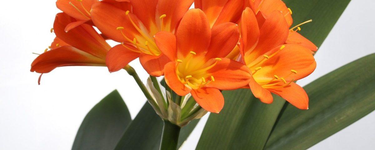 flores de interior invierno