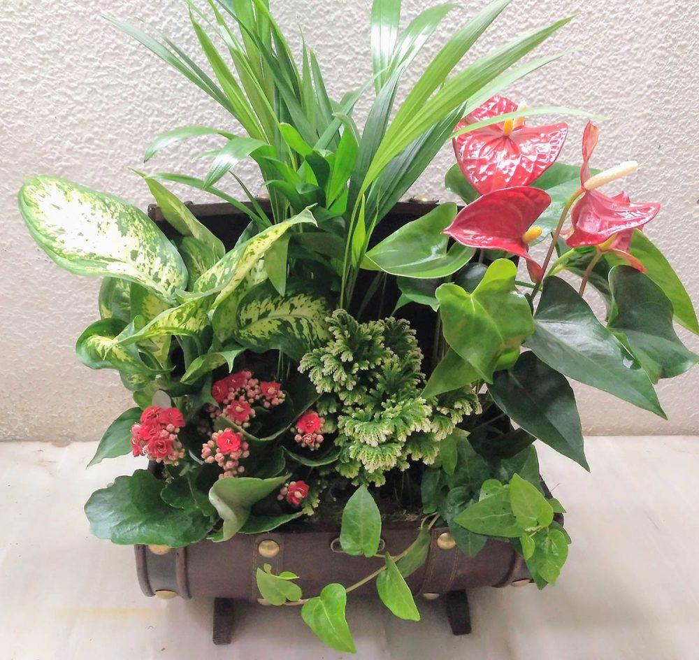 floristeriaparque3_Cofre_de_plantas