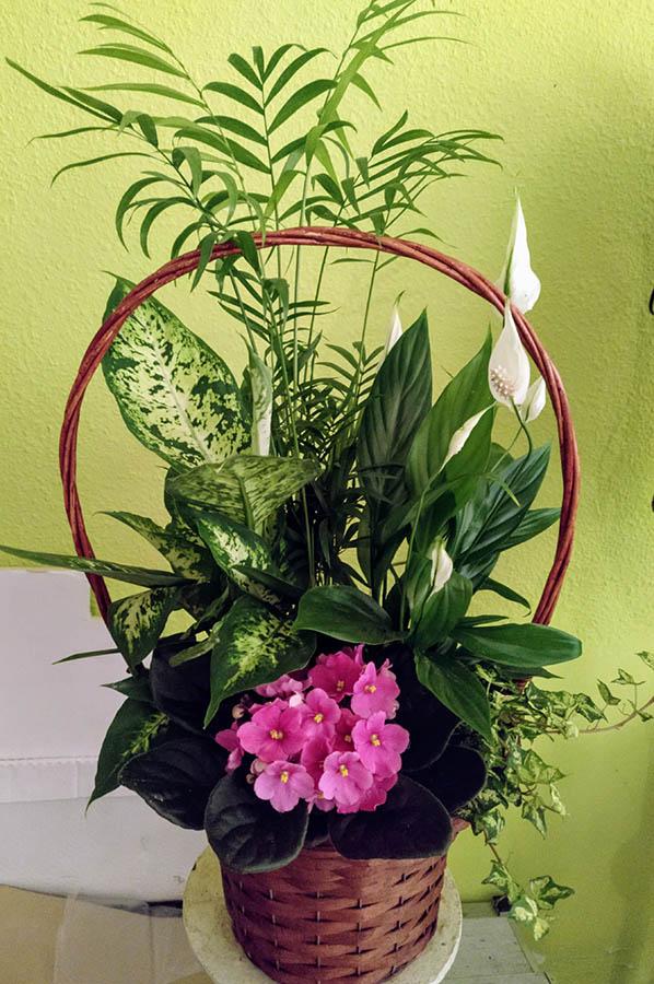 floristeriaparque3_Plantas_1