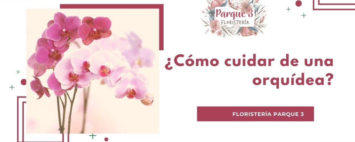 2_Cuidado Orquideas